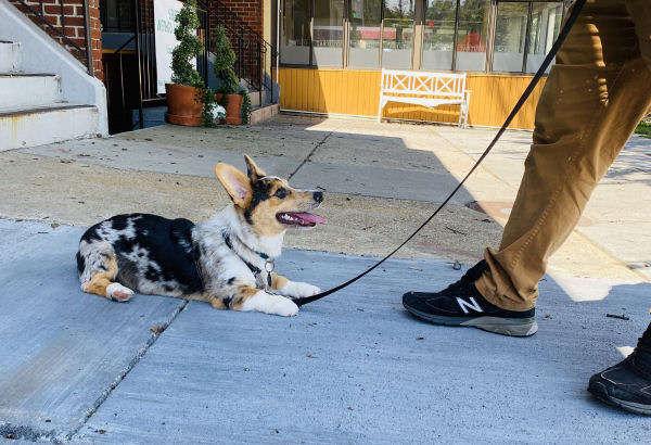 Urban Dog Training