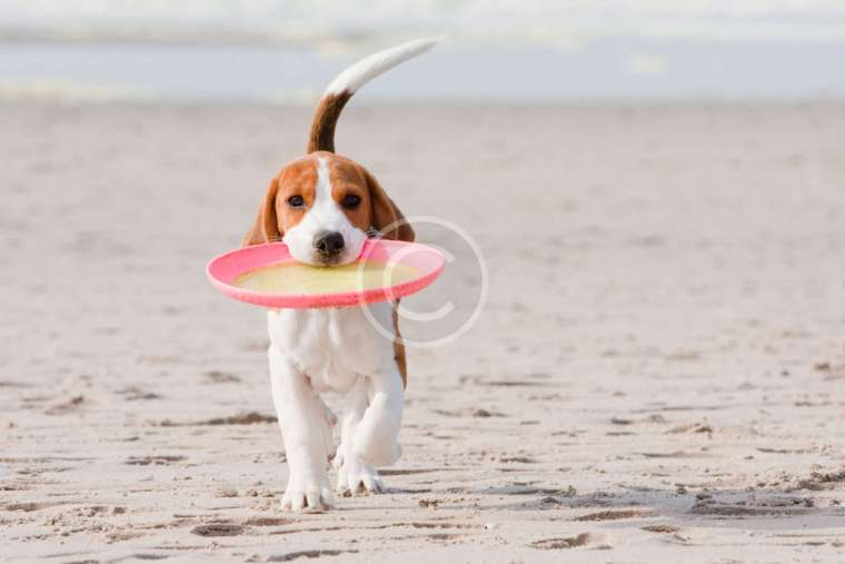 Vitamins, Minerals and Herbal Remedies for Dogs