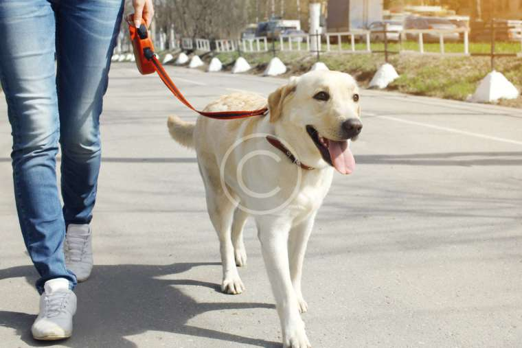 When Canines Compete: Dog Sports